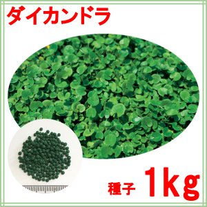 種子ダイカンドラ コート1kg60〜100平米分