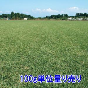 種子ノシバ100g 5〜6平米分