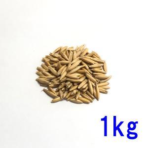 種子えん麦(オーツヘイ)殻つき1kg送料無料|donoubukuro