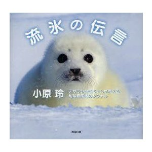 新品本/流氷の伝言 アザラシの赤ちゃんが教える地球温暖化のシグナル 小原玲/著