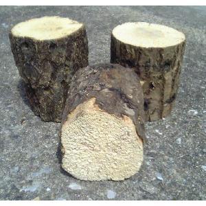 産卵木 (良質ナラ材) Bクラス 特大サイズ