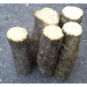 産卵木 (良質ナラ材) Bクラス 小サイズ