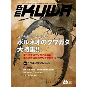 BE-KUWA 66号(メール便送料込み) ビークワ66号  ★ポイント8倍★