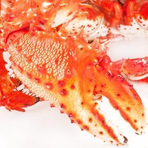花咲ガニ 北海道 根室産(オス)800g前後×2尾(北海道産 ボイル済み 堅蟹 最高級)甘く濃厚な蟹身は絶品。ギフトに大好評、高評価ありがとうございます!|dosanko-factory|05