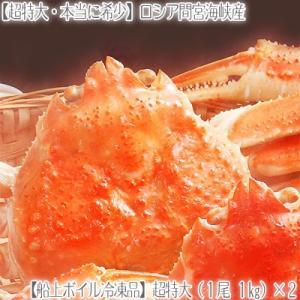 (送料無料 ズワイガニ 超特大 姿)ロシア間宮産 1kg前後×2尾(最高級 北海道直送 船上ボイル冷凍 ズワイ姿 濃厚 蟹味噌 ボイル済み) dosanko-factory