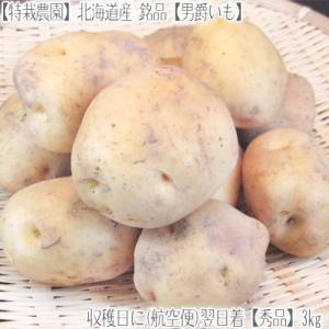 (送料無料 じゃがいも 男爵いも 北海道産)北海道 男爵イモ L 3kg(ジャガイモ 正規品 最高級 収穫日に空輸で翌日着!北海道ブランド 特別栽培農園産) dosanko-factory