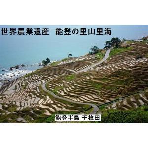 予約受付中:新米H30年産/無洗米/能登コシヒカリ/特A一等米10K(5k×2):世界農業遺産:能登の里山:食味値:80|dotg-live|02
