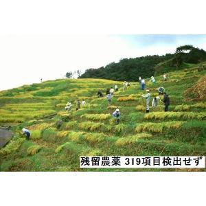 コシヒカリ 玄米 新米30年産 エコ栽培 特A一等米(食味値80) 10K 世界農業遺産 能登里山の米|dotg-live|03