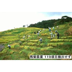 コシヒカリ 玄米 新米30年産 特A一等米(食味値80) 30K 世界農業遺産 能登里山の米|dotg-live|03
