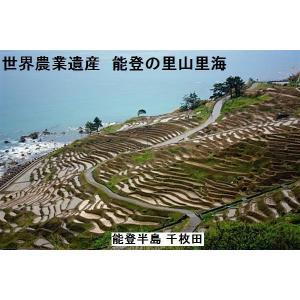新米H29年産/特別栽培:棚田米/特A一等米10K(5k×2袋)/無洗米/能登コシヒカリ:世界農業遺産:能登の里山:食味値:86|dotg-live|02