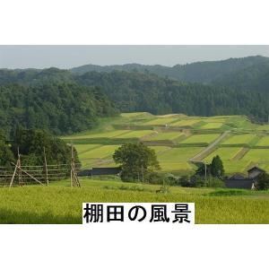 コシヒカリ 玄米 新米30年産 特別栽培 棚田米(食味値86) 10K 世界農業遺産 能登里山の米|dotg-live|03