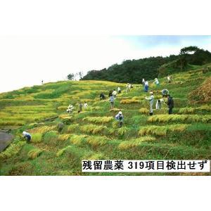 コシヒカリ 玄米 新米30年産 特別栽培 棚田米(食味値86) 10K 世界農業遺産 能登里山の米|dotg-live|04