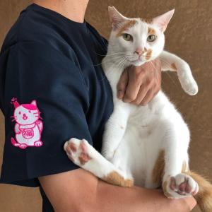 招き猫Tシャツ|doubutu-kikin
