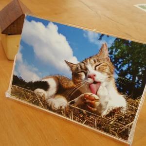 さくらねこポストカード(12枚セット)|doubutu-kikin