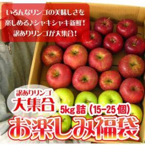 りんご 訳あり 福袋 5kg 青森もしくは北海道産 リンゴ ...