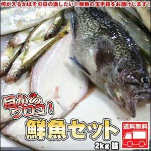 鮮魚セット 2kg 業務用 居酒屋 送料無料 北海道産 沖縄送料別途加算|dousan