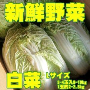 新鮮野菜 バイキング 白菜 Lサイズ 3-4玉入9-10kg...