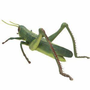 在庫あり【送料無料】ジョークグッズ 巨大バッタ 【メガバッタ】|dragon-bee