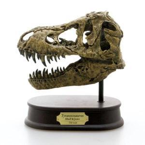 玩具 恐竜 フィギュア DINOSAUR SKULL&JAWS MODEL ティラノサウルス スカル&ジョーズモデル FDS-651 (70551) 模型 頭骨 フィギュア 骨格|dragon-bee