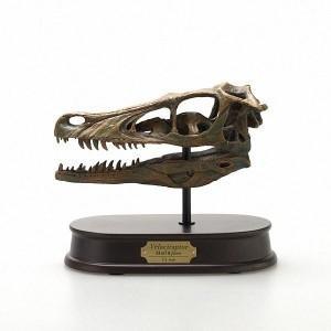 玩具 恐竜 フィギュア DINOSAUR SKULL&JAWS MODEL 恐竜 ヴェロキラプトル スカル&ジョーズモデル FD660 (70383) ヴェロキラプトル 化石 模型|dragon-bee