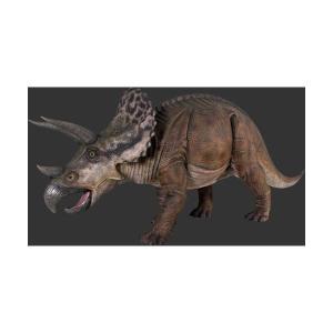 全長4.3m!トリケラトプス巨大フィギュアB(恐竜等身大フィギュア) ※この商品は別途送料かかります、ご注文後お知らせいたします|dream-f