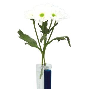 実験キット 大発見!植物の生きる力 小学生 理科 中学年 植物|dream-realize