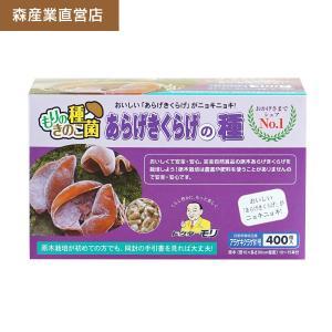 キクラゲ種駒 【きくらげ種駒400個】 [キクラゲ菌/きくらげ菌/原木キクラゲ栽培/種駒] 日本で一番売れてます! drmori1