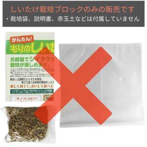 エリンギ栽培キット 【もりのえりんぎ農園おかわ...の詳細画像2