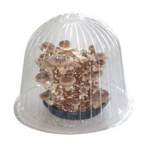 キノコ栽培キット専用容器 【きのこ栽培容器B】...の詳細画像1