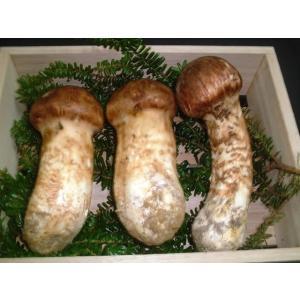 松茸 岩手県産 上つぼみL約200g 2〜3本|ds-morioka