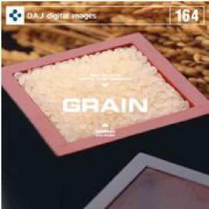 【特価】DAJ 164 GRAIN|dtp