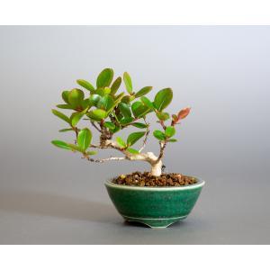 ミニ盆栽 サルスベリ盆栽 百日紅(さるすべり・小さな盆栽 百日紅)小盆栽 4165 e-bonsai