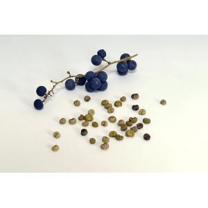 盆栽種子 アオツヅラフジの種子・青葛藤・あおつづらふじ盆栽種子・s005|e-bonsai