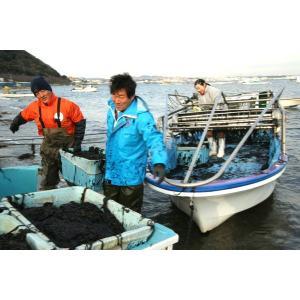 焼きのり 横須賀名産 江戸前高級海苔 走水産100% (10枚入)|e-chai|03