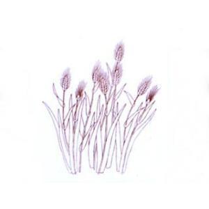 陶芸/下絵用転写紙 U53|e-gazai-tougei