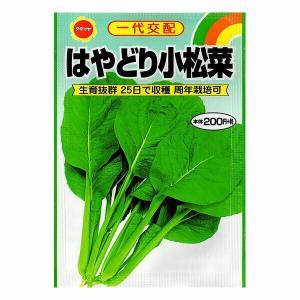 アタリヤ農園 野菜種 コマツナ はやどり小松菜 M