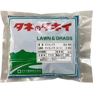 タキイ種苗 緑肥 グランドカバー ダイカンドラ[コート] 0.5kg メール便対応2点まで(B14-005) e-hanas