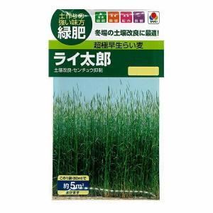 タキイ種苗 緑肥 超極早生らい麦 ライ太郎[BMU512] 60ml入(5平方メートル撒けます)  メール便対応|e-hanas