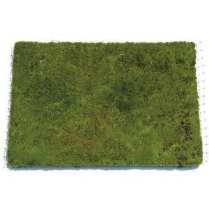 日陰で育つ白緑色苔。空気中の水分のみで生育します。 清楚な表情で庭を彩ります。