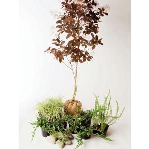 """おしゃれな雰囲気の""""スモークツリー""""をシンボルツリーにしたセットアップはシックなガーデンにぴったり。..."""