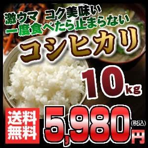 岐阜県産こしひかり コシヒカリ 10キロ おいしいお米...