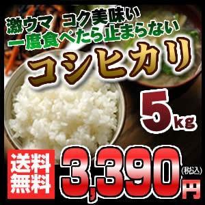 岐阜県産コシヒカリ こしひかり 5キロ...