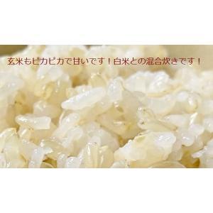 玄米 ミルキークイーン 10kg(5kg×2袋) 兵庫県産|e-koshihikari|03