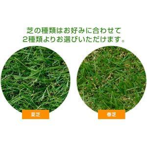 人工芝 芝生 ロール 1m×10m 芝生マットの詳細画像4