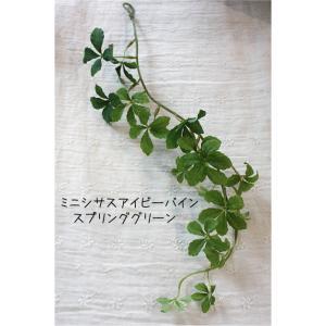 S.ミニシサスアイビーバイン シュガーパイン (スプリンググリーン)40890 51s|e-mintcafe