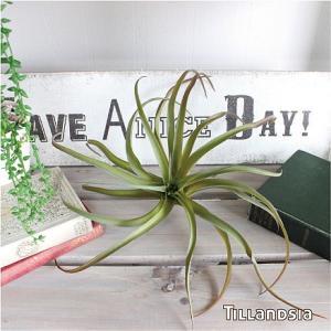 エアプランツ グリーンレッド Φ30cm 42251 観葉植物 造花 インテリア フェイクグリーン  チランドシア チランジア ティランジア 10P03Dec16|e-mintcafe