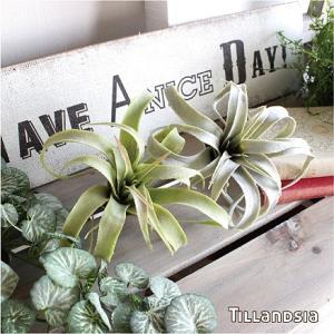 エアプランツ カール フェイクグリーン 観葉植物 造花 インテリア リアル おしゃれ チランジア ティランジア ティランドシア キセログラフィカ|e-mintcafe