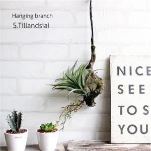 フェイクグリーン ハンギングブランチ S ランジア エアプランツ 多肉植物 造花 CT触媒|e-mintcafe