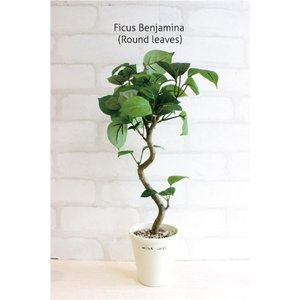 ミニ観葉植物 丸葉ベンジャミン 40cm 造花  フェイクグリーン 観葉植物 CT触媒
