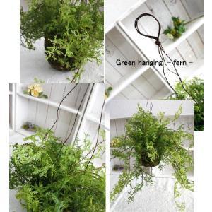 ミニ観葉植物 グリーンハンギング・ファーン (...の詳細画像1